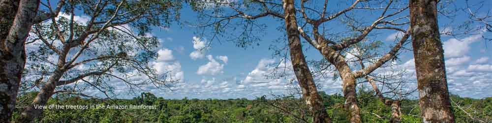 amazon-view-treetops-jungle-ecuador