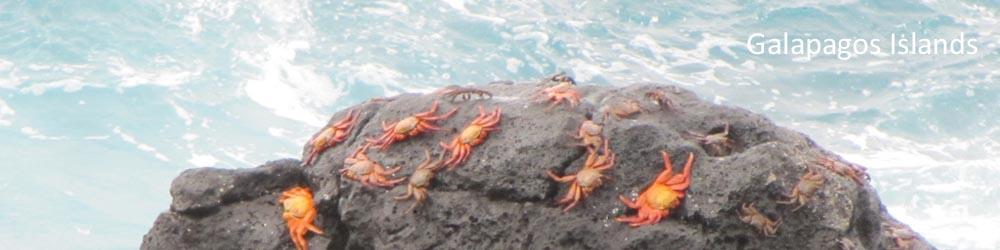 crabs-beach-galapagos-islands-ecuador