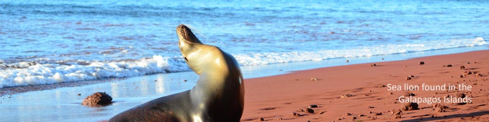 sea-lion-galapagos-islands-ecuador