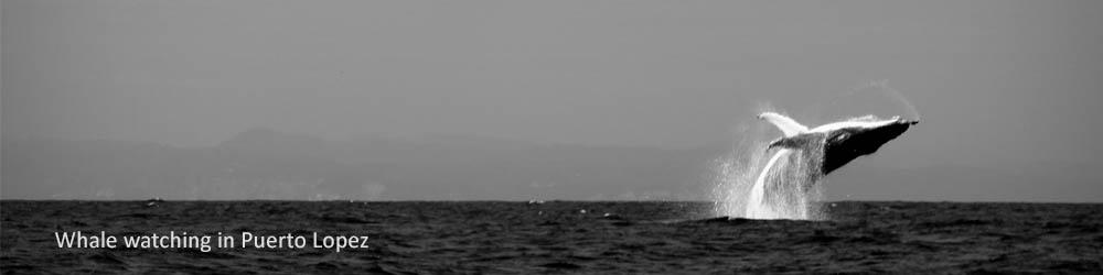 whale-watching-puerto-lopez-ecuador
